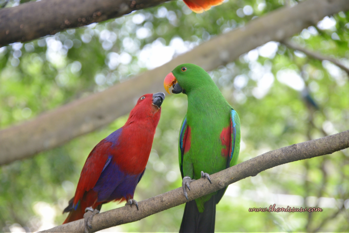 Aviary - Cebu Safari and Adventure Park