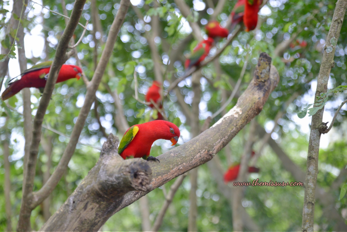 Cebu Safari and Adventure Park - Aviary