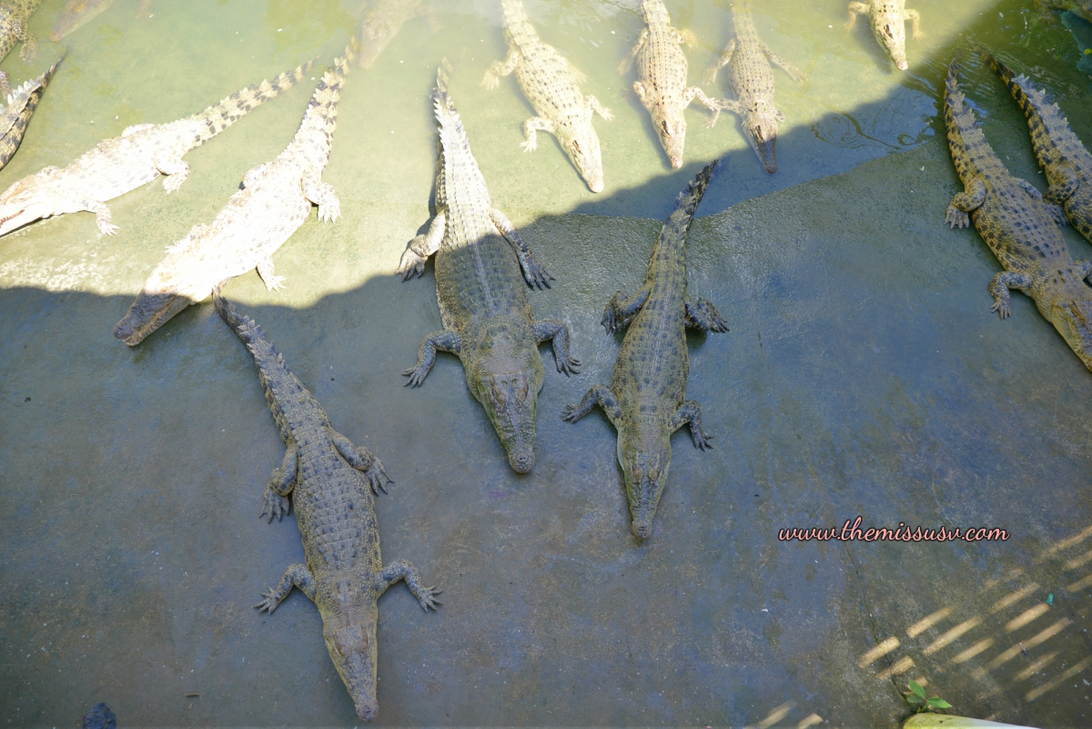 Cebu Safari and Adventure Park - Crocodile