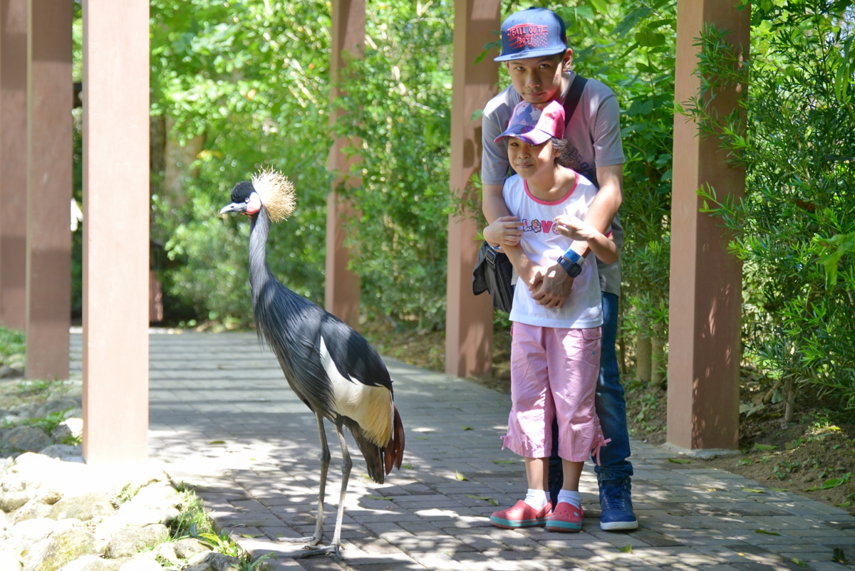 Cebu Safari and Adventure Park - Fowls