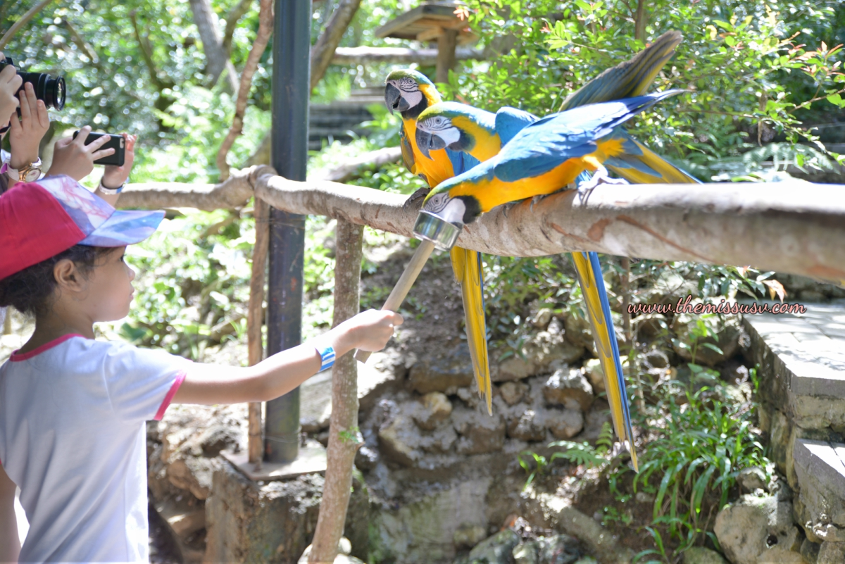 Cebu Safari and Adventure Park - Macaw Birds