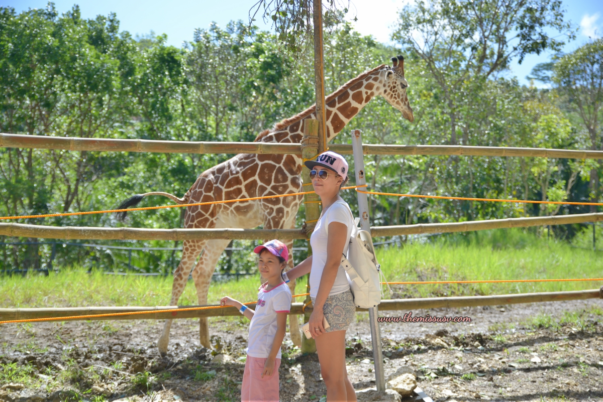 Cebu Safari and Adventure Park - Seeing a Giraffe for the First Time