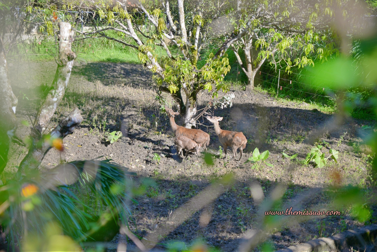 Family Day at the Cebu Safari and Adventure Park- A deer! I think.